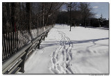 A long, cold walk.jpg