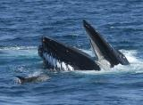 Whales are Dolphin Safe_5672.jpg