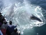 Look Whales_4674.jpg