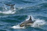 Dolphin Play_1662.jpg