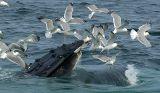 A Flock of Seagulls_5346.jpg