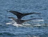 Synchronized Diving_9065.jpg