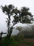 Mist FR.jpg