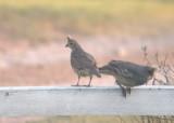 usa_birds