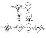 X-Y_Bees