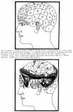 Emily Love-cranial globe