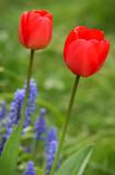 Bloomin' Marvellous