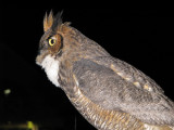 NightOwl - A Chance Encounter