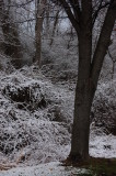 Welcome to Spring? - Spring - Day 1 Langhorne