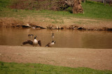 Duck Pond at Reedman Farms - Bucks County