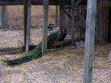 Reedman Farm - Revisited