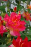 Flower from Someone's Garden