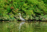 Water Birds of Core Creek Park - Bucks County