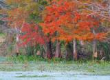2009 Fall at Brazos Bend State Park at Needville Texas near Sugarland.jpg