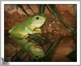 LittleTree Frog.