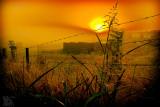When the sun struggles to break through thick mist.