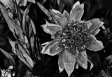 Flower For sale.