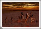 Just On Sunup Australind Estuary.
