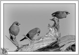 Leshenslaut Inlet Birds.