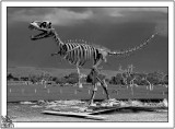 Its Not True! South Western Australia is not full of dead Dinasours.