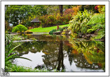 The Garden During  A Break In The Autumn Rains.