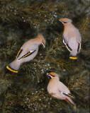 Délice aux fruits - Huile 20 x 16 - Collection privée