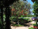Antique Rose Emporium, Brenham, Texas - April 9, 2006