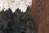 Palm Canyon!