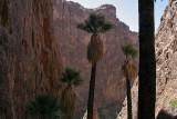 Palm Canyon, Quartzsite, AZ, 2009