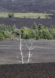 Craters of the Moon, Idaho, 2009