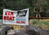 ELK MEAT--I think the idea was to catch one for dinner, kind of like lobster.