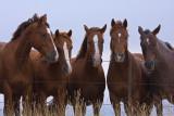 Horses at sunrise