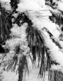 Fresh Snow  #2