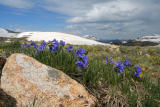 Wild Flowers on top of the World