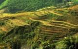 Sapa, Rice fields