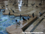 pigeons at the mosque