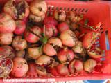 pomegranates at the souk