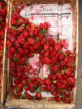 strawberries in a box, fes, maroc