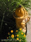 7.23.06 canyon road 40 yellow hydrant.jpg