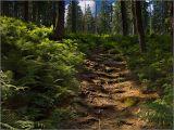 Beskidy pathway