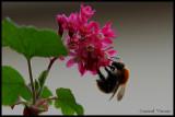 Bzz ... Bzz ... les abeilles
