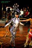 A beautiful zebra