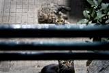 Cats, Heybeliada