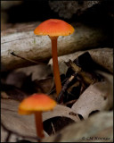 1574 Mushrooms.jpg
