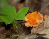 1593 Mushroom.jpg