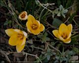 Florals 2009