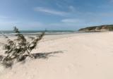 Beach and she-oak, Captain Billy Landing (DSC3829)