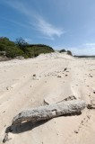Dune and driftwood (DSC3983)