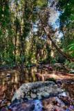 Birthday Creek and rainforest near Paluma, Queensland