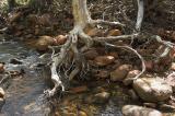 Living in a floodplain is risky _DSC3395